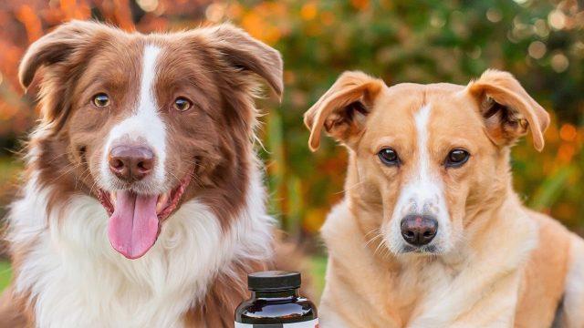 Petz Park – Dog Supplements