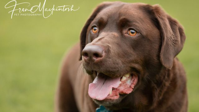 Pet Photography by Fran Mackintosh