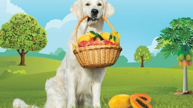 Pawfect Pet Foods Pvt. Ltd.