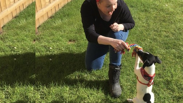 Dog Walking Services Sedgefield
